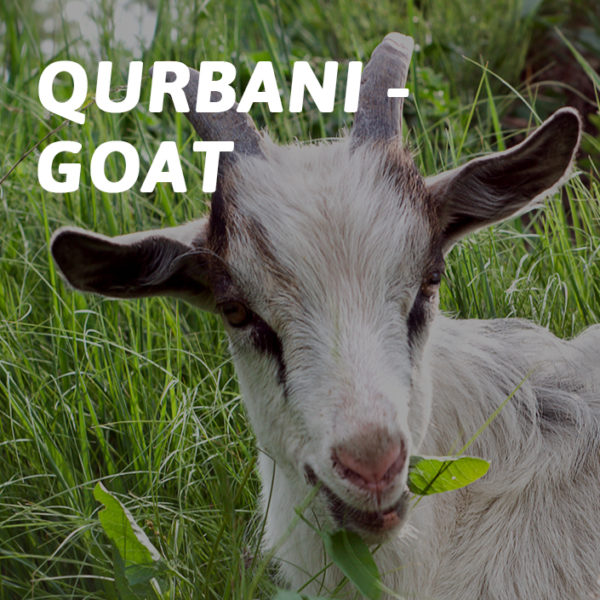 Products705x705Goat